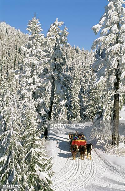 sleigh in the forest - montanhas north shore imagens e fotografias de stock