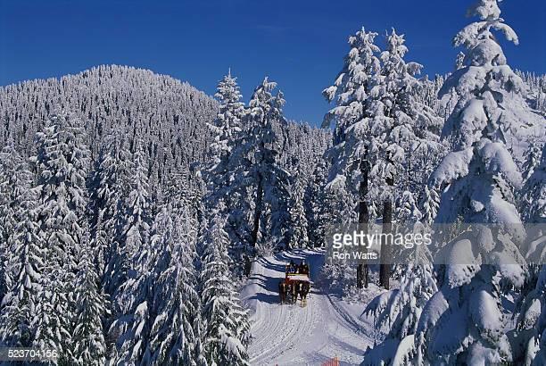 sleigh ride on grouse mountain - grouse mountain ストックフォトと画像