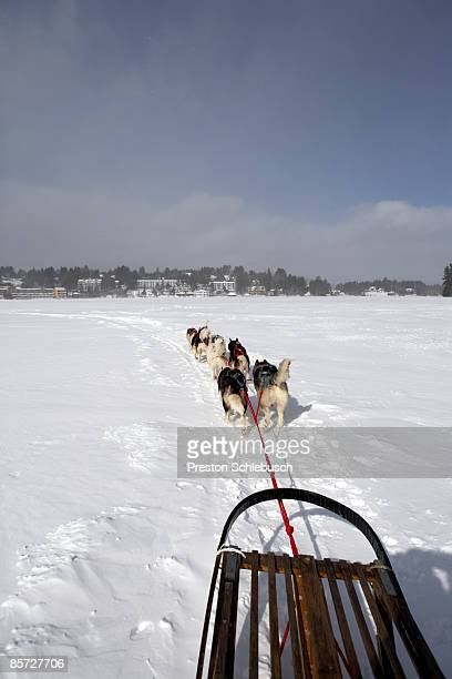 sleighdogs - schlebusch stock pictures, royalty-free photos & images