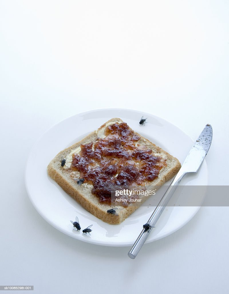 Slice of bread and jam on plate covered in houseflies : Foto stock