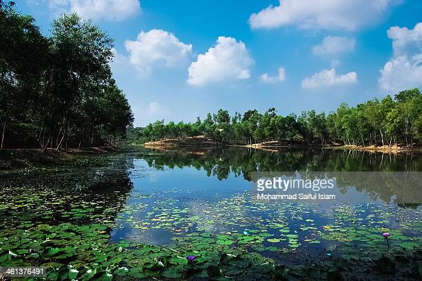 a slice of heaven_madhobpur lake_srimongal - bangladesh nature stock photos and pictures