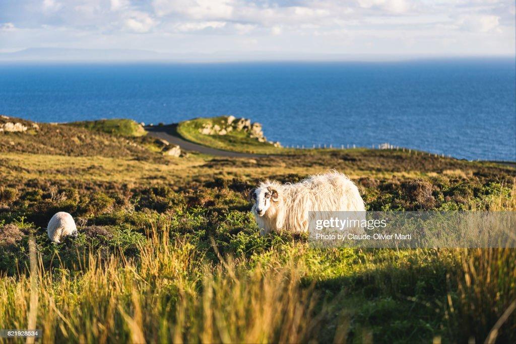 Slieve League's cliffs, Northern Ireland : Stock Photo