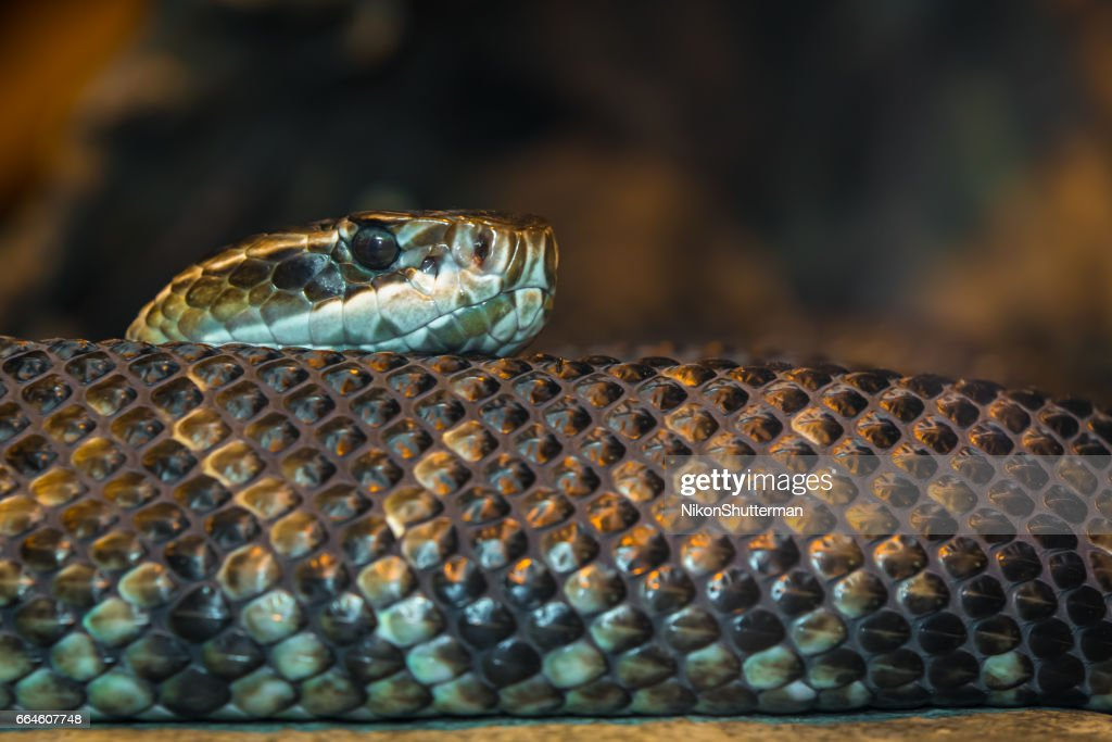 A Slithering Snake : Stock Photo