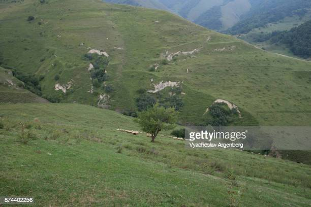 slopes of caucasian mountains in ingushetia/chechnya - chechnya stock pictures, royalty-free photos & images