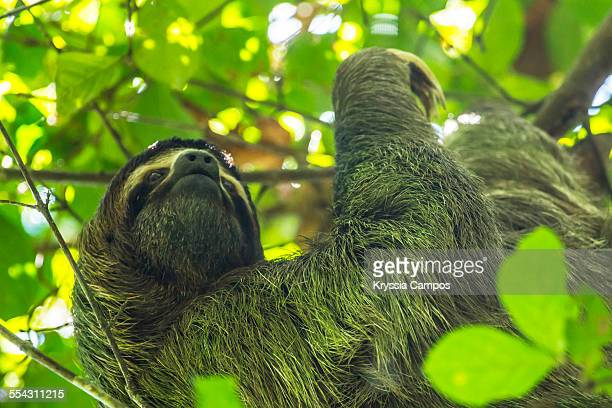Sloth at Manuel Antonio National Park, Costa Rica