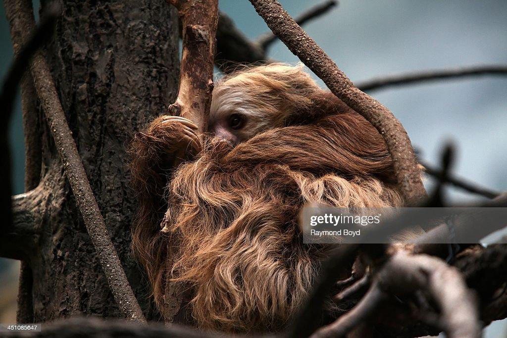 Brookfield Zoo Animals : News Photo