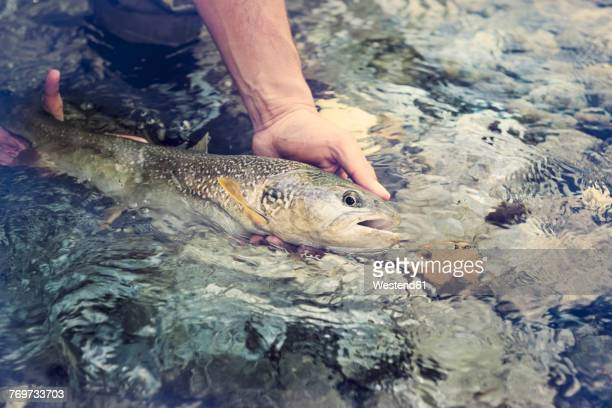 Slovenia, man fly fishing in Soca river catching a fish