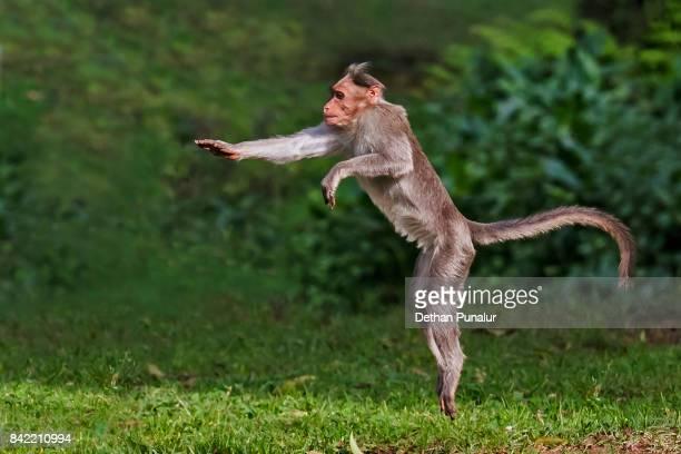 slow motion - comportamiento de animal fotografías e imágenes de stock