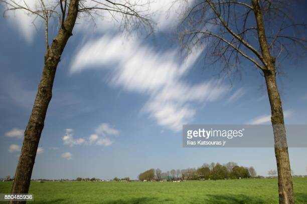Slow moving clouds against two bare trees