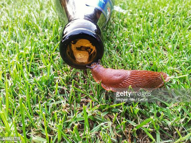 slug by abandoned bottle on grassy field - hermaphrodite photos et images de collection