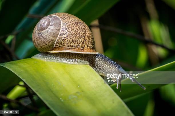 slug - limace photos et images de collection