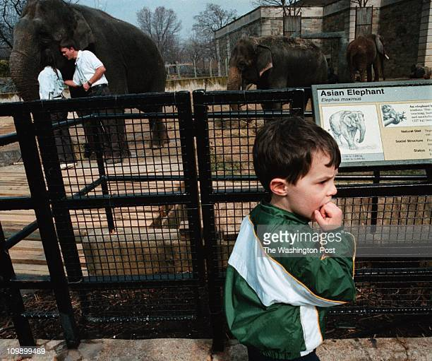 M/Elephant19 Nationa'l Zoo Young Eric Tschiderer 3yrs old from WashingtonDC visits the Elephants at the National Zoo Erics aunt explained that the...