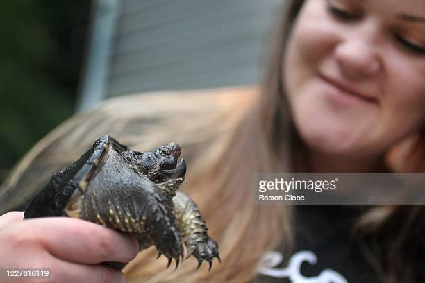 Smajkiewicz holds Franklin the snapping turtle who she rescued when he was the size of a dime after he was attacked by a bird and lost most of his...