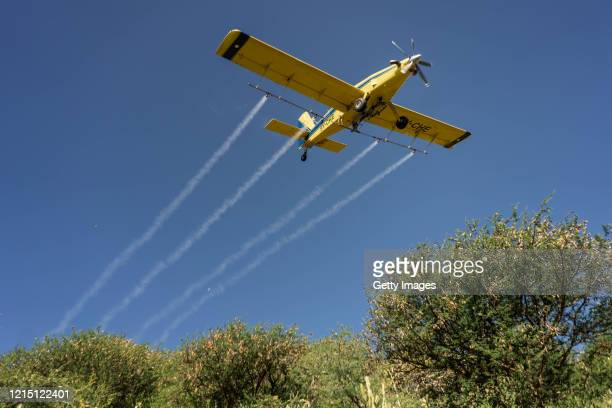 Small airplane fumigates a locust swarm that has been roosting over night on May 23, 2020 in Samburu County, Kenya. GPS coordinates are sent from...