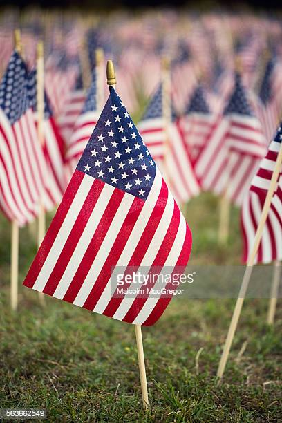 Small American Flag in a field of many