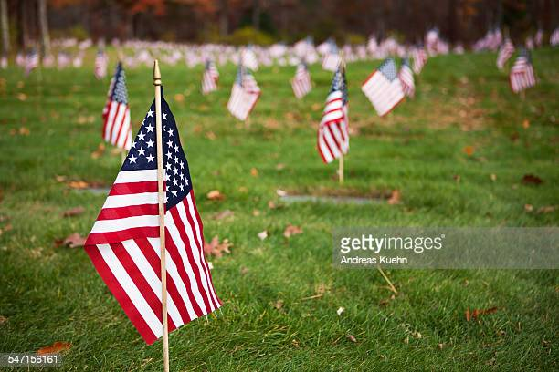 Small American flags on a cemetery