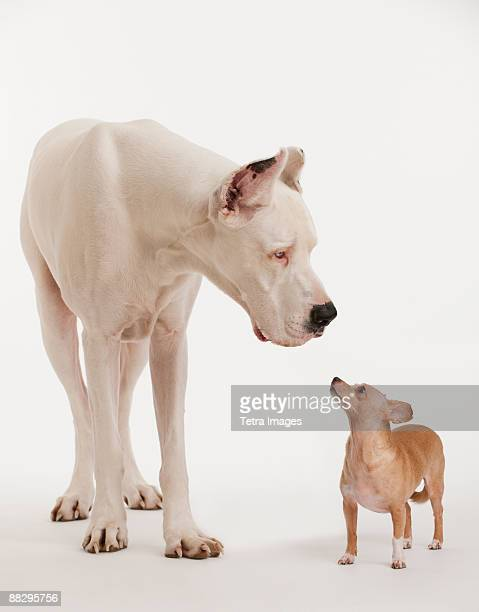 Small and large dogs looking at each other