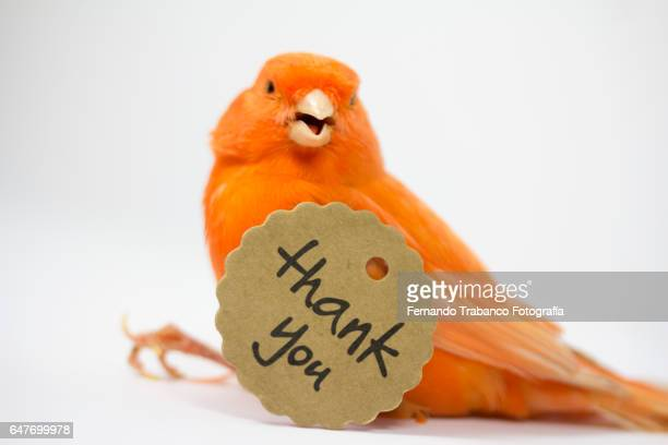 Small and red bird with a thank you card