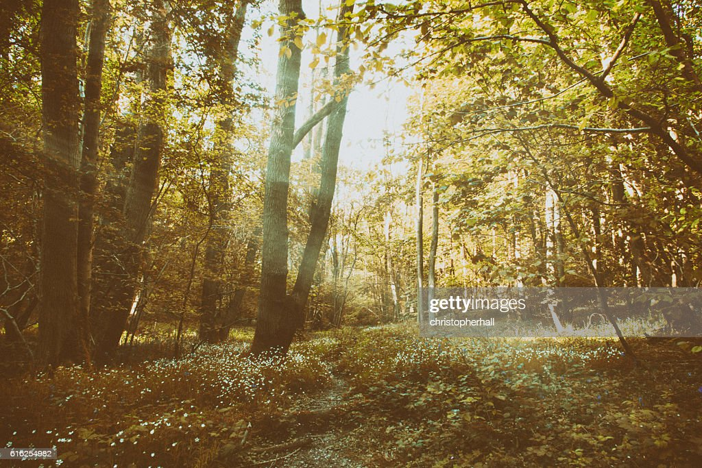 Small animal track leading through the woods : Stock Photo