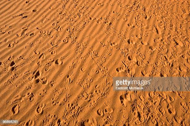 Small animal tracks in red sand, Arizona
