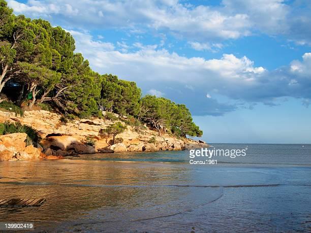 small beach - grove imagens e fotografias de stock