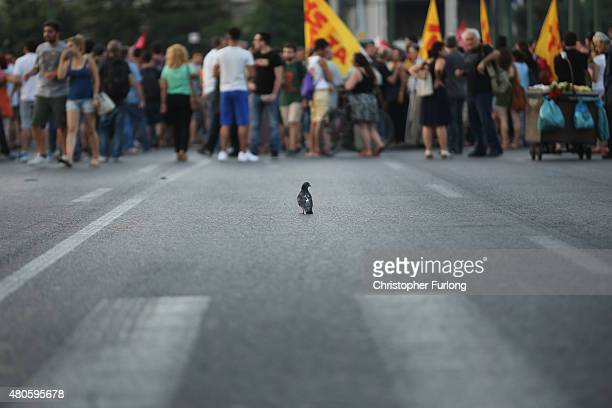 A small bird is seen in front of protesters gathering outside the Greek parliament to demonstrate against austerity after an agreement for a third...