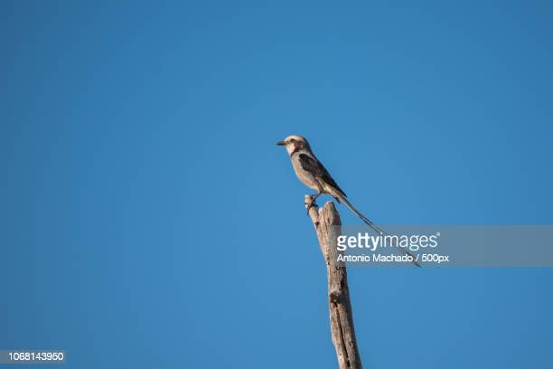 Small bird sitting on branch against clear sky