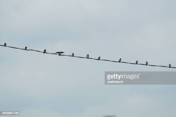 small birds on electric cable with cloudy background - shaifulzamri foto e immagini stock