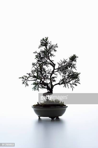 A small bonsai on the desk.