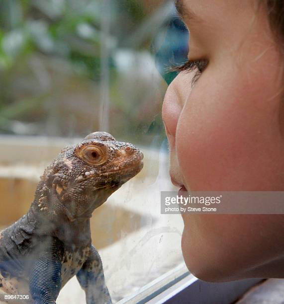 Small boy and reptile looking at each other
