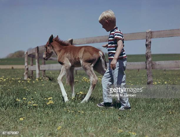 small boy playing with pony in horse farm  - pony play bildbanksfoton och bilder