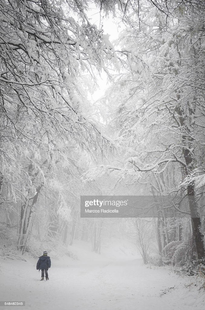 Small boy walking in snow forest : Stock Photo
