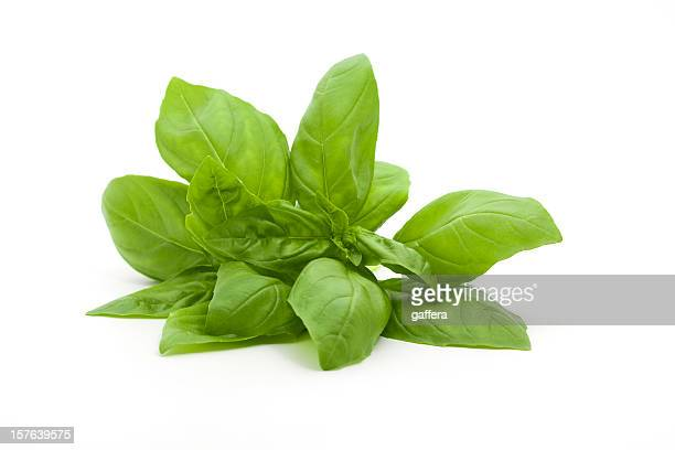 A small bunch of fresh basil against a white background