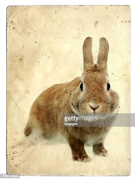 小型 Bunny Rabbit にビンテージ背景