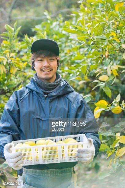 農場のスモール ビジネス所有者彼の柑橘類の農場で収穫したレモンを保持