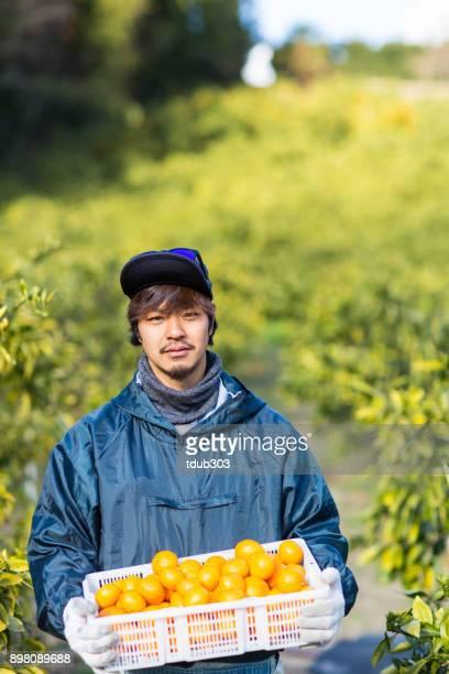 農場のスモール ビジネス所有者彼の柑橘類の農場で収穫されたみかんを保持
