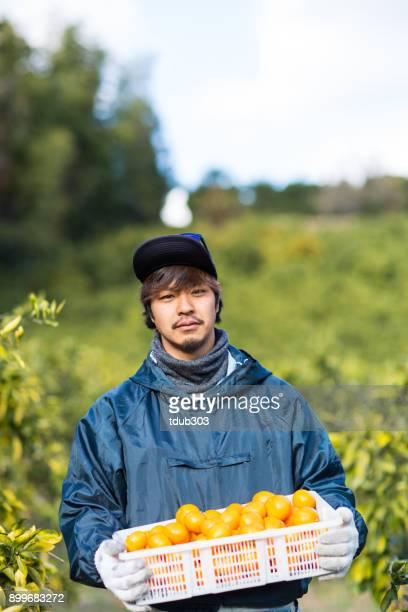 農場の小企業所有者彼の柑橘類の農場でみかんを狩り