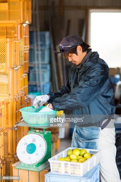 中小企業農場の所有者レモンを計量し、その品質をチェック