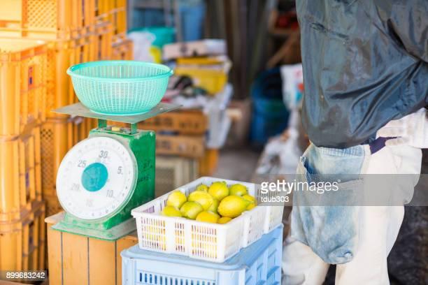 農場の小企業所有者彼の柑橘類のファームでレモンを計量
