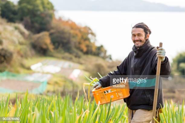 ein kleines unternehmen bauer ernte gemüse auf seine bio-bauernhof - landwirtschaftliche tätigkeit stock-fotos und bilder