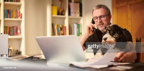 small business owner - pets stock pictures, royalty-free photos & images