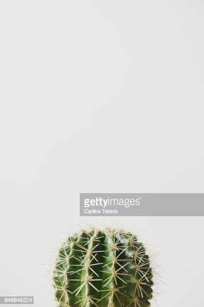 small cactus on a white background - cactus stock-fotos und bilder