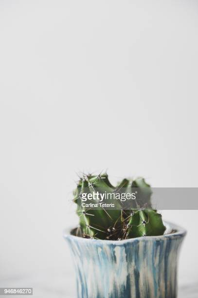 Small cactus on a white background