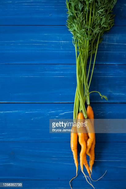 small carrots with greens on blue - brycia james stock pictures, royalty-free photos & images