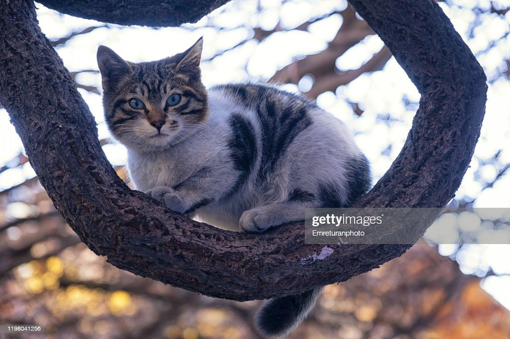 Small cat standing on a thick ivy branch,Kemeralti. : Stock Photo