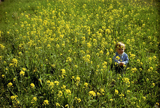 A small child stands surrounded by a field of yellow flowers