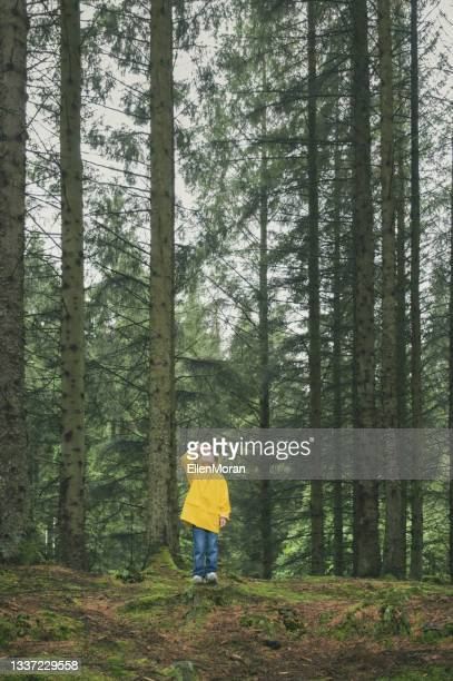 small child tall trees - named wilderness area stock pictures, royalty-free photos & images