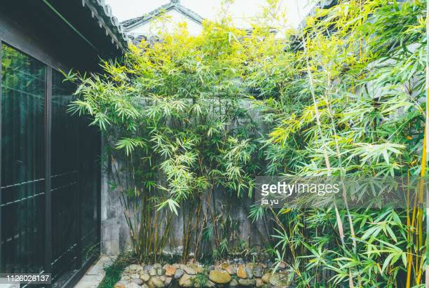 Bamboo Plant Stock Pictures Royalty Free Photos Images Getty