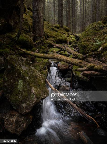 small creek flowing in a natural nordic forest with moss clad rocks and tree trunks - arne jw kolstø stock pictures, royalty-free photos & images