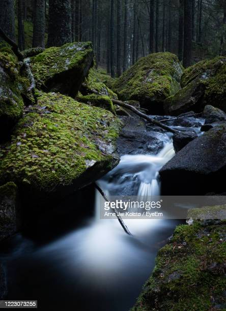 small creek running between rocks in a natural, nordic, noody forest - arne jw kolstø stock pictures, royalty-free photos & images
